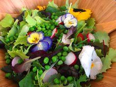 Vyskúšali ste už zeleninový šalát s jedlými kvetmi ? www.vinopredaj.sk  #jedlekvety #salat #salad #zelenina #jedlo #dobrejedlo #food #goodfood #kvety #flowers