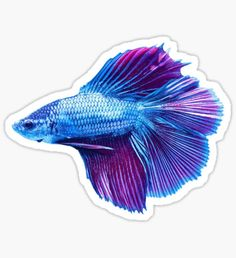 Emerald Blue Betta Siamese Fish Sticker