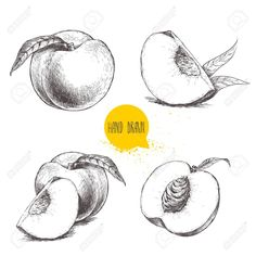 Find Hand Drawn Sketch Style Peach Fruit stock images in HD and millions of other royalty-free stock photos, illustrations and vectors in the Shutterstock collection. Vegetable Drawing, Fruit Sketch, Fruits Drawing, Drawing Sketches, Drawings, Peach Slices, Ripe Peach, Funky Art, Food Illustrations