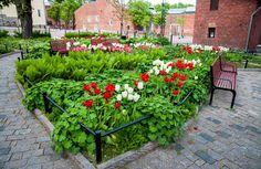 Linnanpuiston perenna-alue on ovaalin muotoinen, perennakukkia on 12 eri lasjia [Hemmo Rättyä]