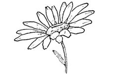 drawing flowers   So many tutorials   Wow