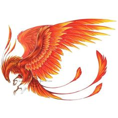 Phoenix tattoo - probably get one, it's cool. And Phoenix symbolism is kinda awesome too. Tattoo Dragon And Phoenix, Phoenix Drawing, Phoenix Wings, Phoenix Artwork, Image Phoenix, Phoenix Images, Phoenix Design, Phoenix Tattoo Design, Neue Tattoos