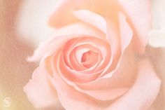 Florecitas – Tomás Sestayo