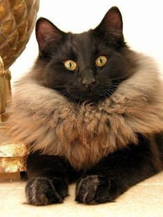This is a natural fur collar.