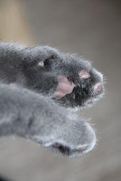 Clean paws...