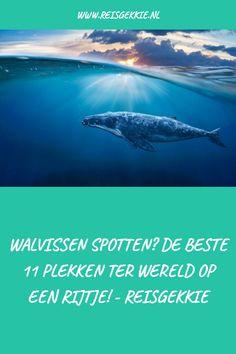 Droom jij ervan om walvissen te spotten? Er zijn goede plekken in Europa, maar ook wereldwijd hiervoor te vinden. Wij hebben er 11 op een rij gezet voor jou! MADE WITH PINGENERATOR.COM Desktop Screenshot