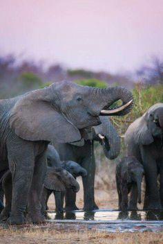 Krugerpark Zuid Afrika