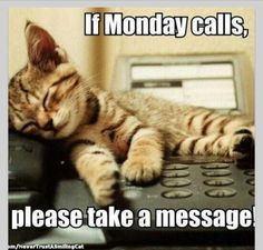 Monday #pets #funny #cats