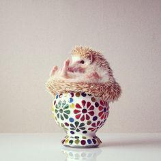 » Pet-therapy per tutti: l'imprescindibile indirizzario delle carinerie zoologiche