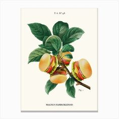 Pizza Plant Art Print by Jonas Loose - Fy Wall Art Prints, Fine Art Prints, Canvas Prints, Plant Cuttings, Plant Art, Diy Frame, Cool Diy, Planting Flowers, Gallery Wall