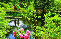 HGTV Gardens features the iconic gardens and nature views on Martha's Vineyard. Japanese Landscape, Nature View, Garden Features, Vacation Trips, Vacations, Black House, Garden Bridge, Places To Go, Exotic