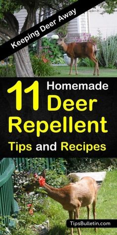 garden care tips Learn how to make homemade, natural deer repellent. Keep deer out of your garden and from eating your plants, flowers and fruit trees, with these simple tips and recipes for keeping deer out of your yard. Homemade Deer Repellant, Petunias, Organic Gardening, Gardening Tips, Indoor Gardening, Container Gardening, Gardening Services, Gardening Quotes, Vegetable Gardening