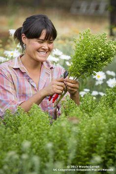 harvesting #farmerflorist #dinnerbellfarm