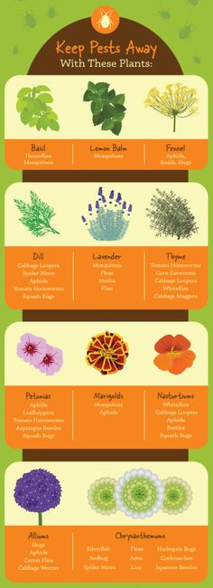 17 Charts For People Who Love Plants print charts and add to garden journal! Ver… 17 Charts For People Who Love Plants print charts and add to garden journal! Very helpful! Garden Care, Diy Garden, Garden Projects, Garden Landscaping, Diy Projects, Dyi Garden Ideas, Tree Garden, Backyard Projects, Landscaping Tips