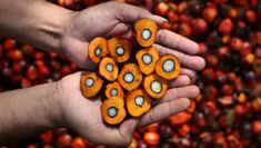 From palm oil to bike rides in the dark - the interactive websites that aim to raise awareness Palm Fruit Oil, Palm Oil, Interactive Websites, Healthy Oils, Eat Healthy, Rocky Road, Health And Wellness, The Cure, How To Make