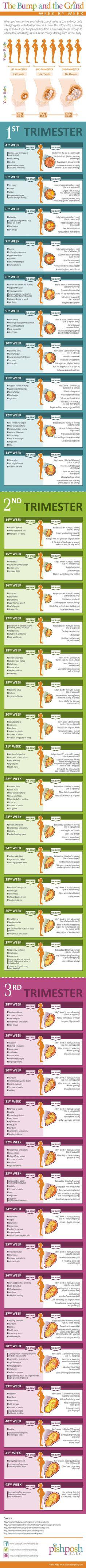 Pregnancy Week by Week Chart - Fun - - Schwanger - Pregnant Tips Pregnancy Chart, Pregnancy Info, Pregnancy Health, Pregnancy Weeks, Pregnancy Timeline, Pregnancy Stages, Pregnancy Trimester Chart, Pregnancy Facts, Pregnancy Pictures