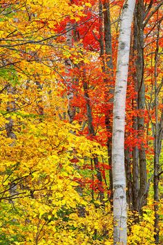 New Hampshire; photo by Kevin McNeal