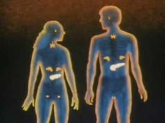 The Endocrine System: How it Works