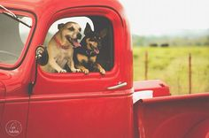 Old Chevy truck & puppies!