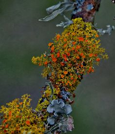 Lichens... And More Lichens.  Create an organic design within the run - create a make believe city, then add people last.