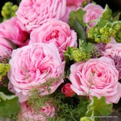KORDES Rosen Rosengräfin Marie Henriette ® - New Roses 2013/2014 - Special series The most beautiful roses of the world