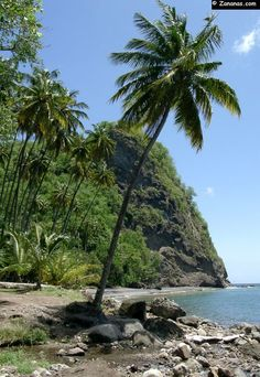 Anse Couleuvre - Martinique - Caribbean.