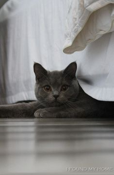 Under the bed- I just want to squeeze that cute little face!! What a cute purry!
