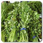 Organic Italian Flat Leaf Parsley