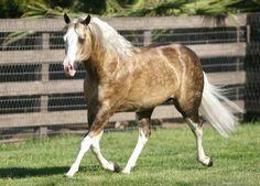 Mona's horse: Golden Son/Sonny (for short)