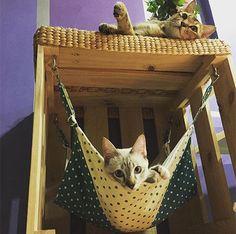 Animal Room, Animal Decor, Animals And Pets, Cute Animals, Diy Cat Tree, Cat Hacks, Gatos Cats, Cat Room, Cat Decor