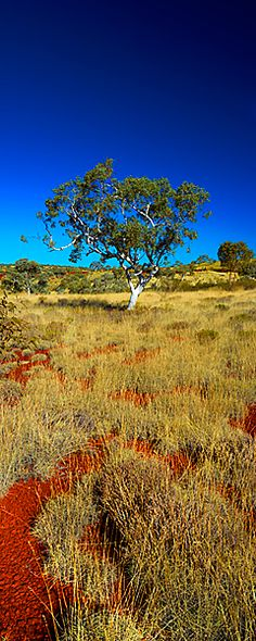 Landscape.  AUSTRALIAN BUSH.