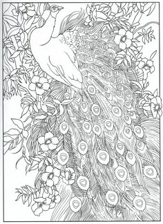 Peacock coloring page, for adults 3/31