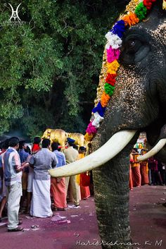People and caparisoned elephants on a festival day in Kerala, India