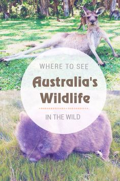 Top spots for seeing Australia's native animals in the wild, including kangaroo, koala, wombat and platypus.