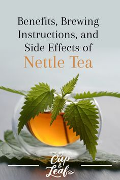 Read on to find out more about the science-backed health benefits of nettle tea. We'll also show you how to brew it and what side effects to watch out for. Calendula Benefits, Lemon Benefits, Matcha Benefits, Coconut Health Benefits, Tea Benefits, Nettle Leaf Benefits, Nettle Leaf Tea, Cough Remedies For Adults, Tomato Nutrition