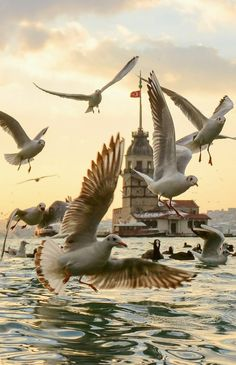 Fly away The Bird  Tower - Uskudar - Istanbul