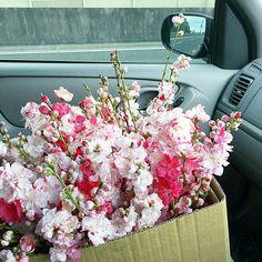【sophiesodaisy】さんのInstagramをピンしています。 《Gloomy outside but I have these beauties sitting in the passenger seat today! . . . . . . . #wedding #peach #pastel #cherryblossoms #weddingideas #inspo #weddingflowers #weddingflorist #sydneyflorist #sydneywedding #sydneyweddingflowers #bridetobe #weddingplanning #pinkflowers #flowers #flowersofinstagram #instaflowers #instawedding #sydney #sydneycommunity #flowers #weddinginspo #시드니웨딩 #floweroftheday #flowerstagram #bridesbook #pink #sydneyflowers》