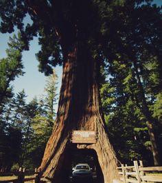 33 Best Mendocino, CA images | California, California coast