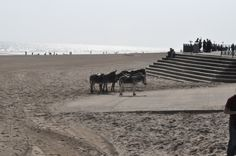 Donkeys on the beach in Mablethorpe......childhood holidays