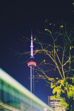 CN Tower at Night // Tracy Zhang Photography