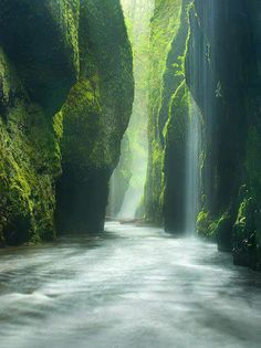 Rainforest Canyon in Oneonta Gorge, Oregon, United States