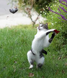 Funny Cat Throws Mouse in Air