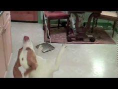 Dog Dance Fail