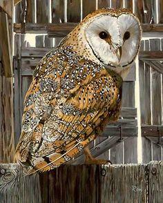 Owl Art; Midnight Watch-Barn Owl Print by Jon Ren | Wild Wings