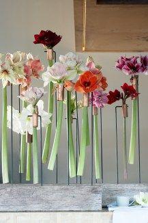 Cut stems of amaryllis, The Joy of Flowers, OHF Deco Floral, Arte Floral, Floral Design, Ikebana, Fleur Design, Corporate Flowers, Ideas Geniales, Christmas Inspiration, Flower Decorations