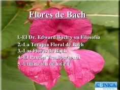 Flores de Bach, by jaromerocarrillejo, via Slideshare