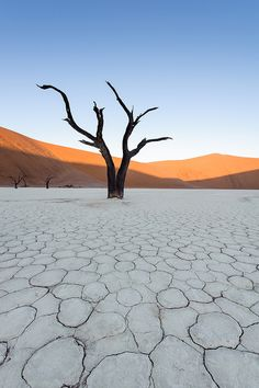 Deadvlei by Monique vd Hoeven on Flickr.