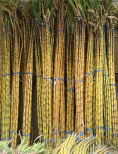 Sugarcane: The Natural Key to #Rum