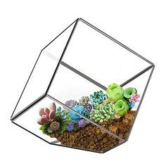 "Bliss Gardens Air Plant Terrarium Kit with 4"" Round Glass / Purple Amethyst Crystal / Shabby Chic"