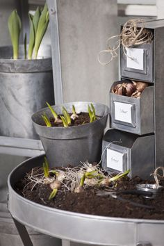 Commode in zinc Potting Sheds, Wood Stone, Natural Garden, Swedish Design, Galvanized Metal, Simple Pleasures, Air Plants, Vintage Industrial, Decoration
